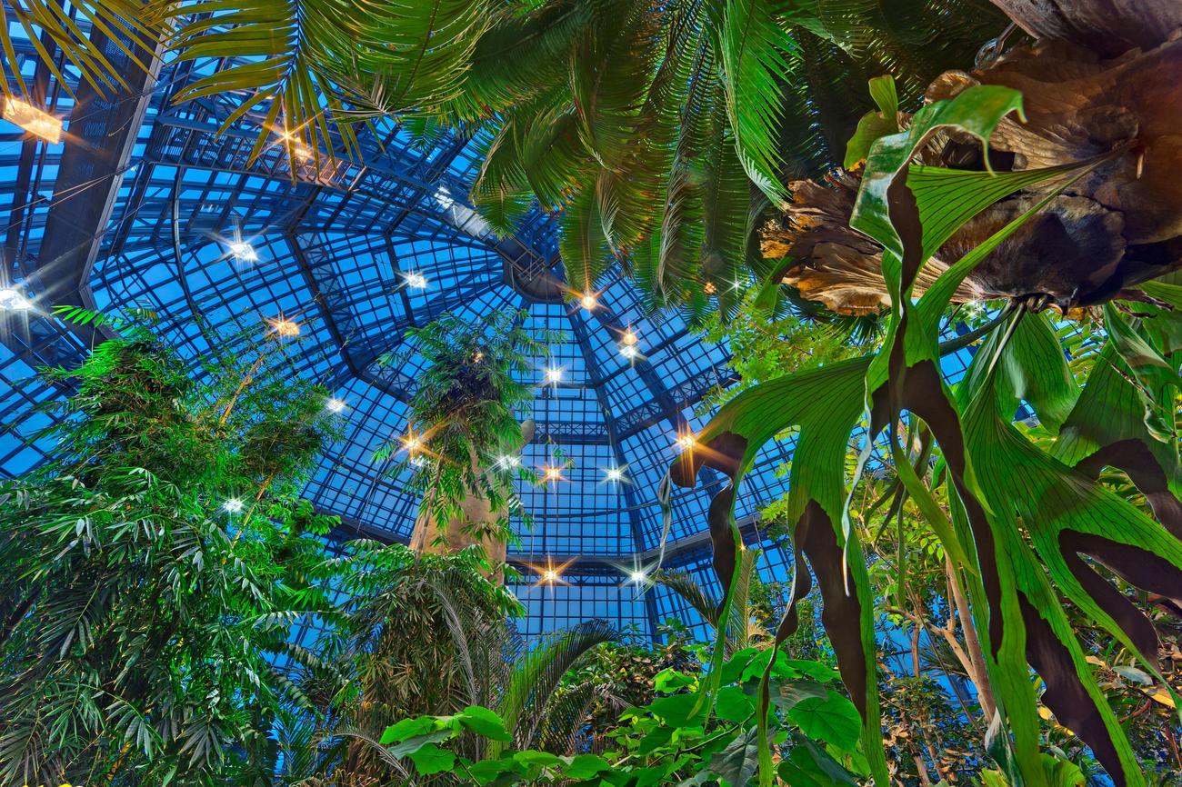 Tropische Nächte im Botanischen Garten • campus.leben • Freie ...
