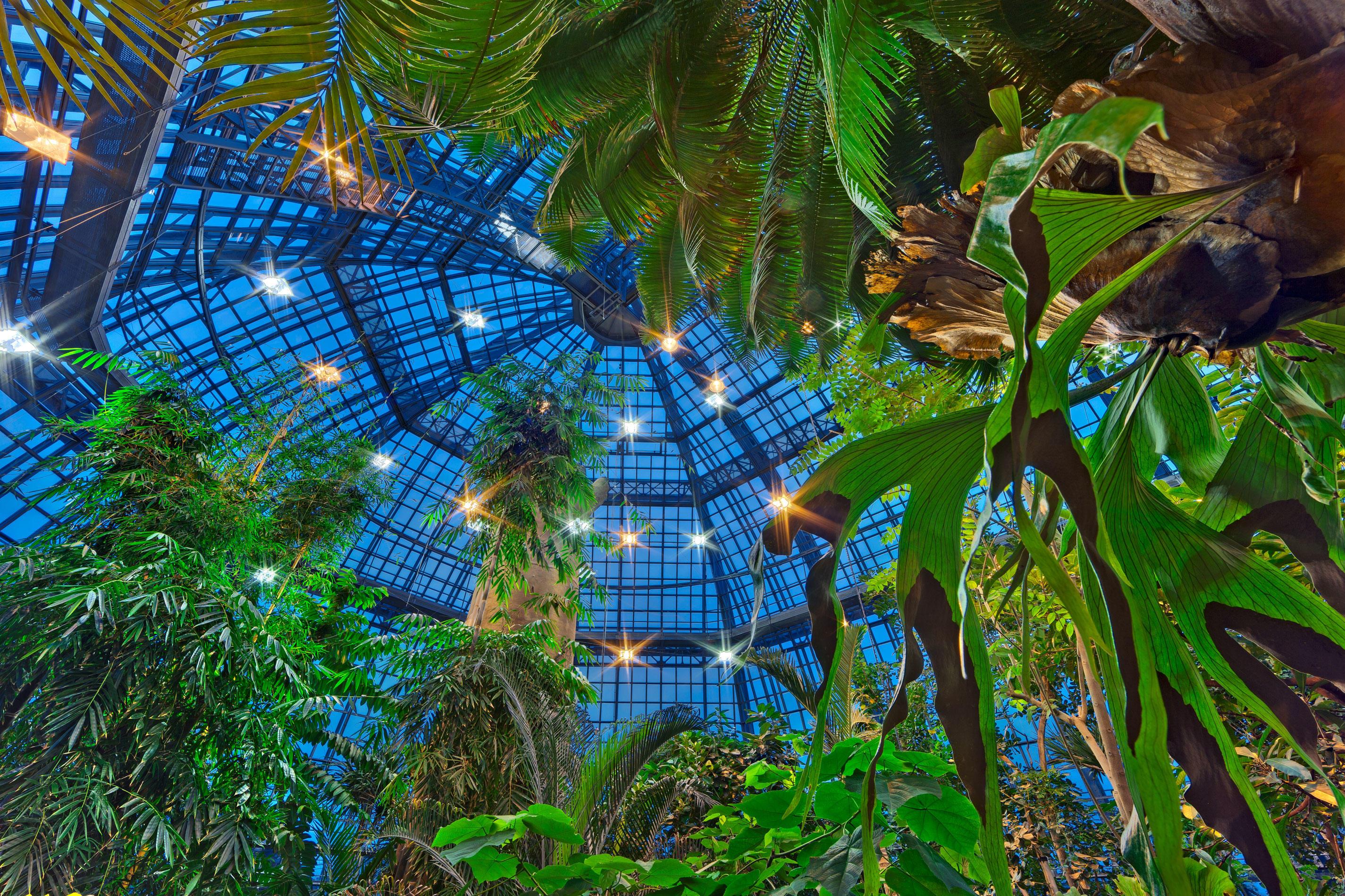 Tropische Nächte Im Botanischen Garten Campusleben Freie