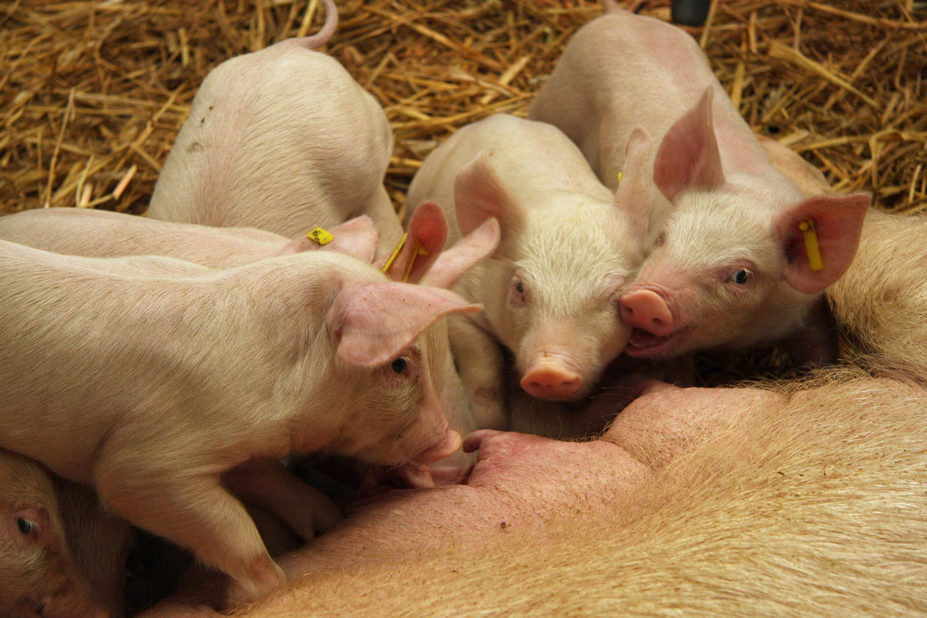 Gesunde Ernährung für Mensch und Tier • campus.leben • Freie ...