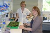 Prof. Dr. Tina Romeis und Doktorandin Heike Seybold haben die Mechanismen bei der Reizweiterleitung in Pflanzen entschlüsselt.