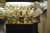 The Gurlt Collection at the Institute of Veterinary Anatomy is open to the public.