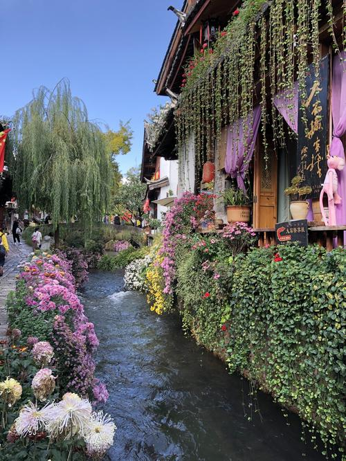 Many flowers adorn the old town of Lijiang.