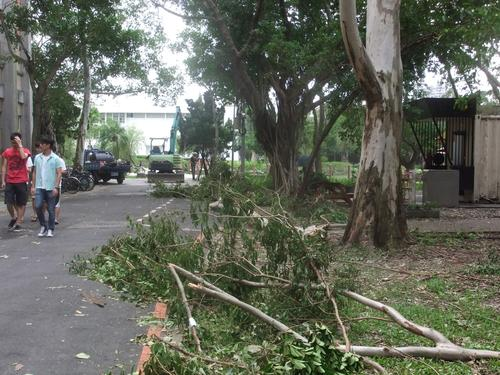 The day after: The typhoon left its mark in the form of fallen trees and other damage.