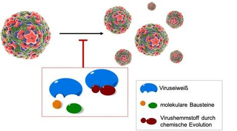 Mechanism of action of the new process, which can inhibit the reproduction of viruses in the human body through molecular self-organization.