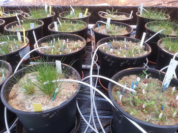 Greenhouse experiments allow scientists to study the effects of soil fungi and other environmental factors on plant communities.