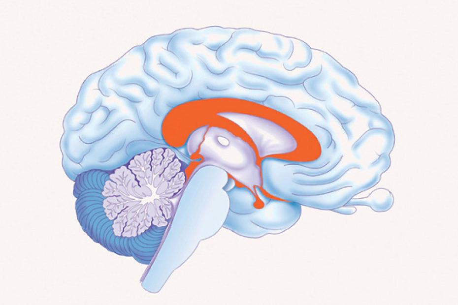 Im Netz der Neuronen • Stabsstelle Presse und Kommunikation • Freie ...