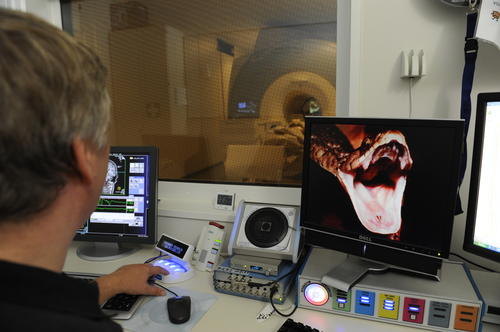 Dahlem Institute for Neuroimaging of Emotion